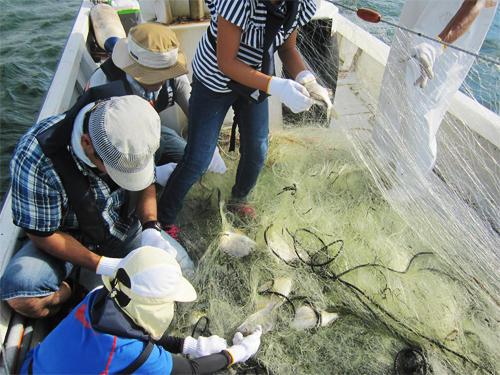 「漁船でgo!姪浜」博多湾で親子漁業体験に関する画像