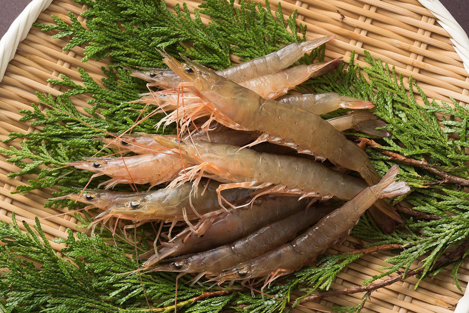 イチオシ地魚情報| ヨシエビ|じざかなび福岡公式サイト