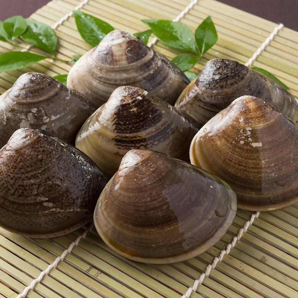筑前海加布里産天然蛤の画像