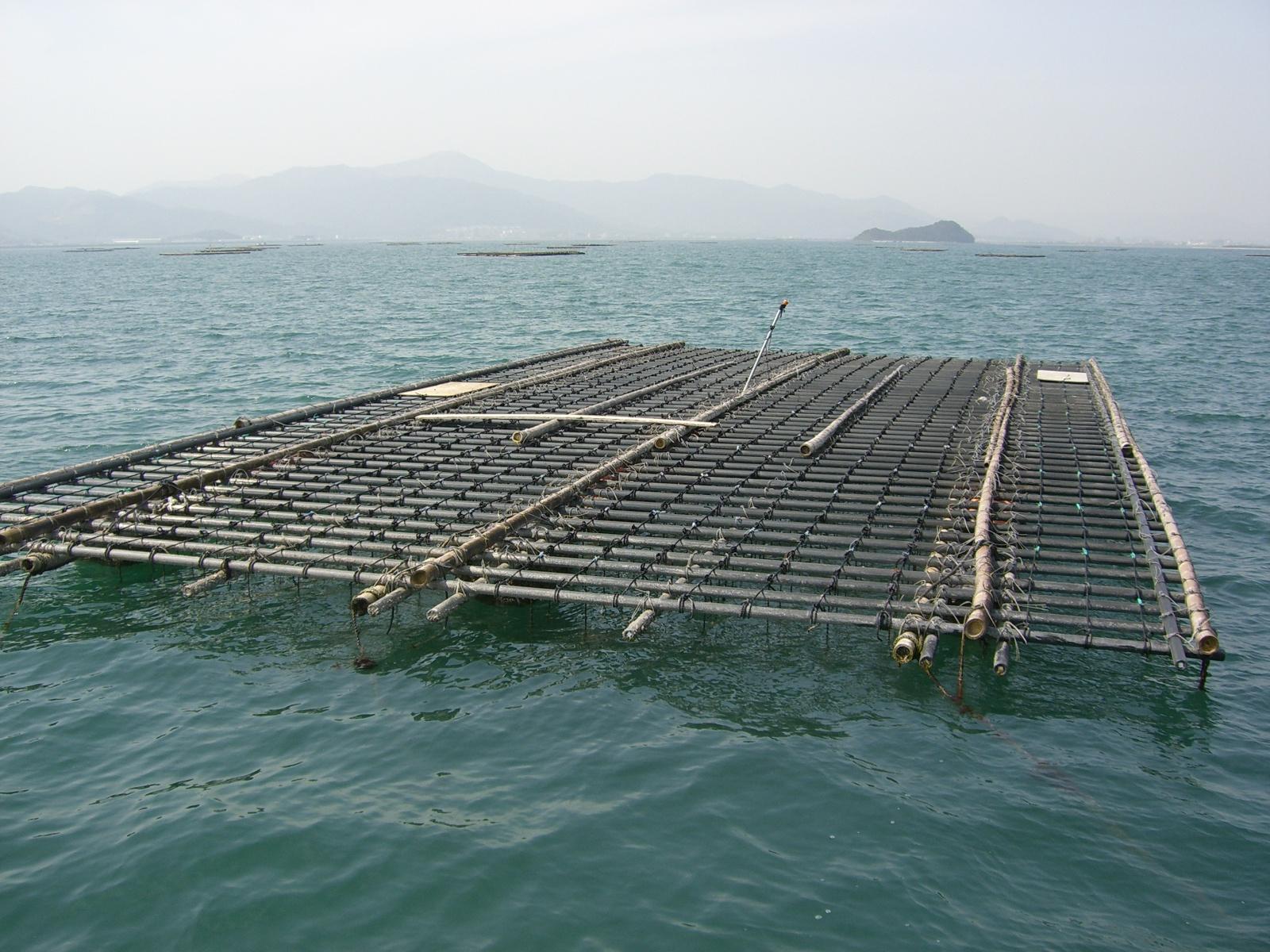かき養殖筏(豊前海)の画像