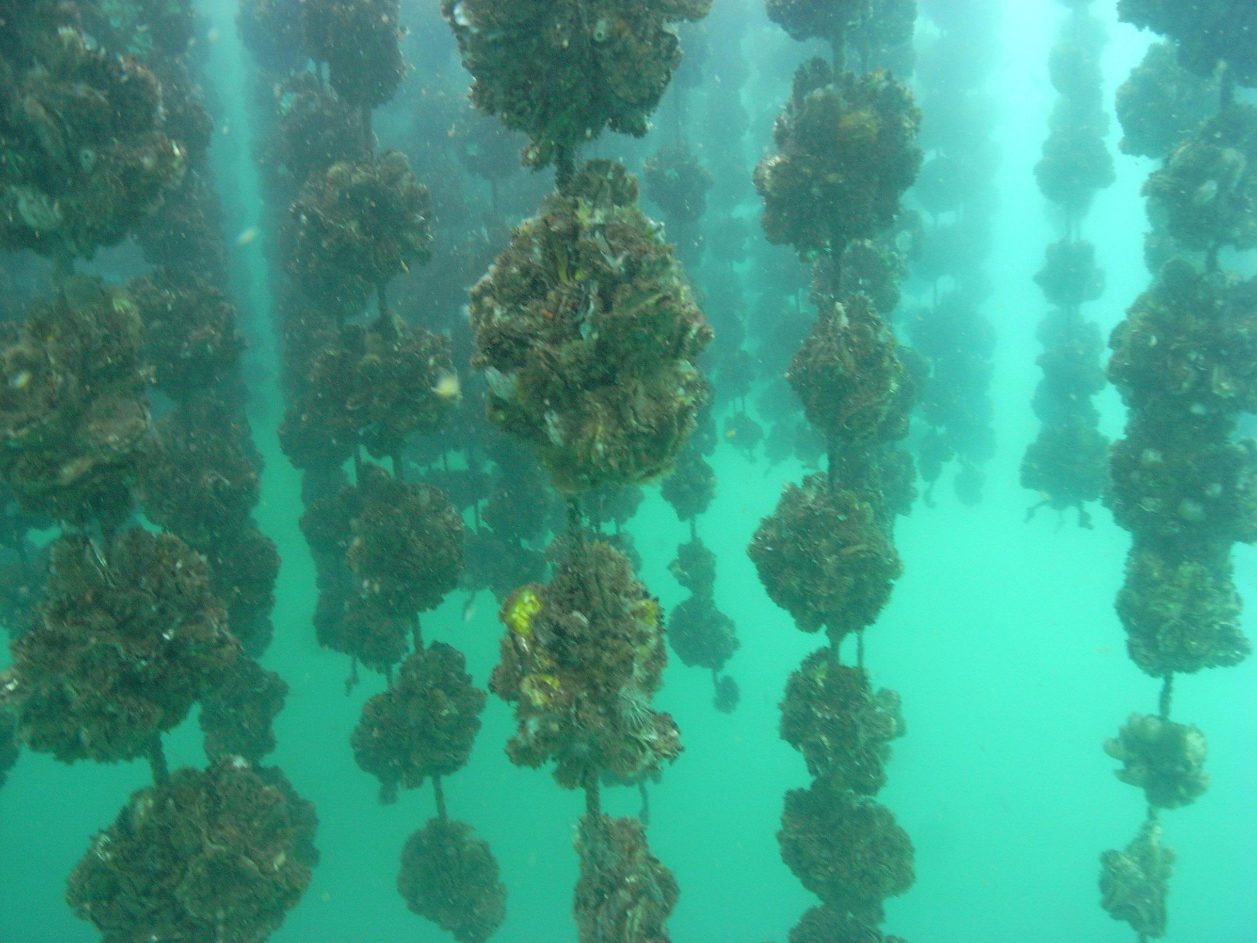 筏の下の様子の画像
