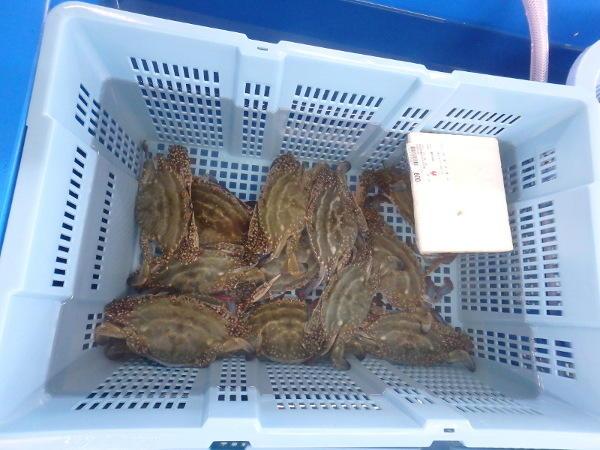 うみてらす豊前豊築漁協直売所「四季旬海」の掲載画像3
