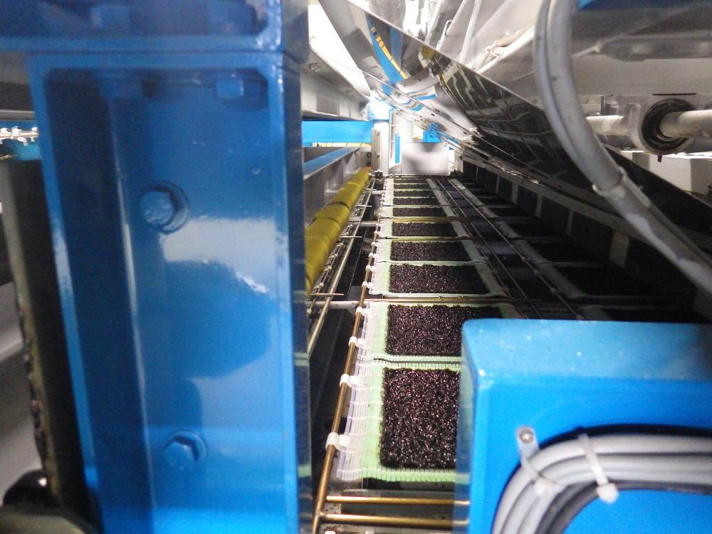 乾燥機で加工されるノリ