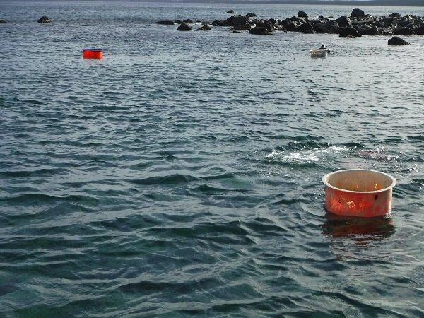 漁業者2.jpg