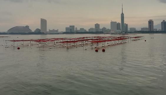 愛宕浜地先が漁場です。
