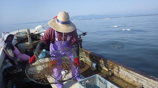 ガザミを漁獲する漁法の「かご」