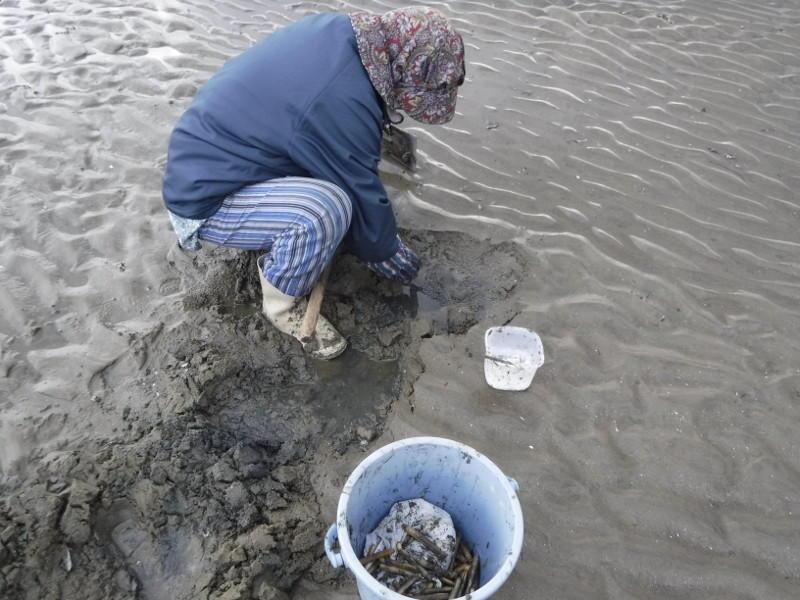 マテガイ掘り(白いのが塩の入れ物)