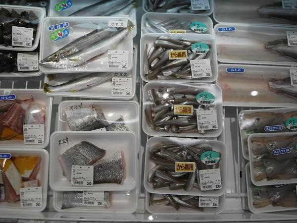 四季旬海にはハモ以外の魚もいっぱい