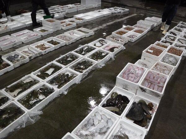 水揚げされた沢山の魚介類