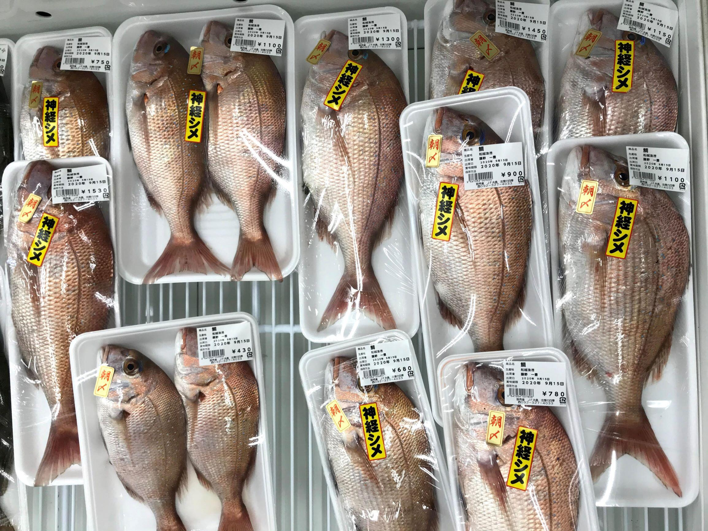 糸島といえば、「真鯛日本一!」です
