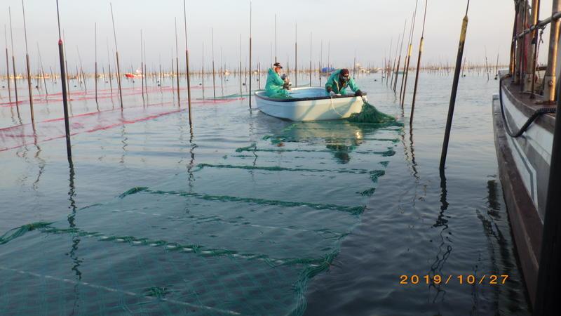 漁場にノリ網が広げられています