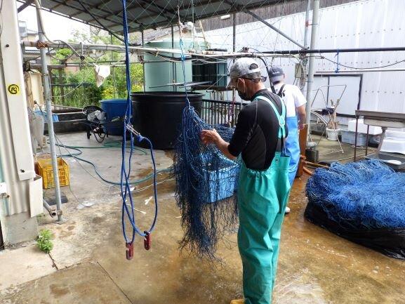洗い終わったら、絡まった網をほどきます。