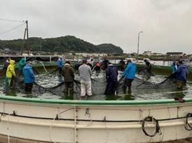 漁業者の皆さんで稚エビを取り上げ
