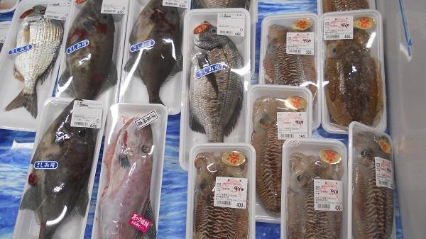 鮮魚の出荷状況