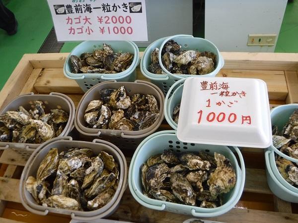 牡蠣 小屋 豊前