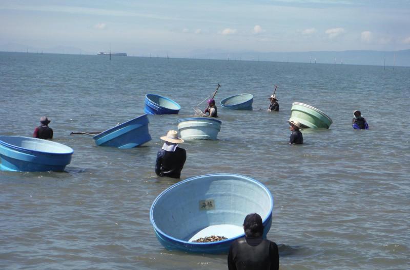 アサリの漁獲風景