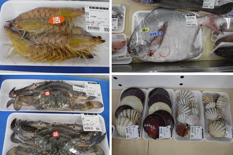 これらの魚介類。本当に美味しいんですよ。